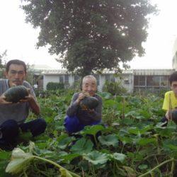 かぼちゃ収穫! 旭光園